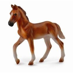 Koń peruwiański paso źrebię maści kasztan m