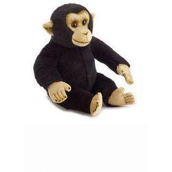 Szympans zwyczajny Pacynka