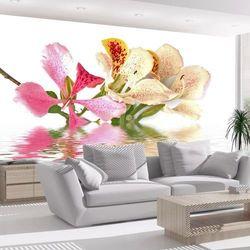 Fototapeta - Kwiaty tropikalne - drzewo storczykowe (bauhinia)