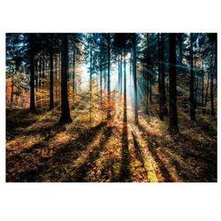 Obraz Glasspik Autumn Sunset 70 x 100 cm