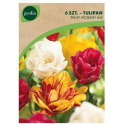 Tulipan pełny wczesny MIX 6 szt. cebulki kwiatów GEOLIA