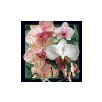 Pozostałe artykuły papiernicze, Pocztówka 3D Orchidea