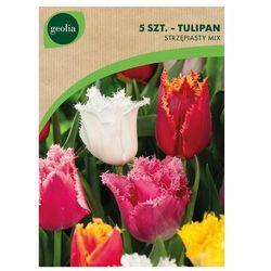 Tulipan strzępiasty MIX 5 szt. cebulki kwiatów GEOLIA