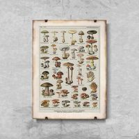 Plakaty, Plakat retro do salonu Plakat retro do salonu Botaniczny plakat grzybów pieczarek