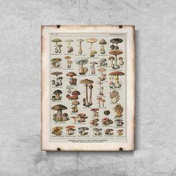 Plakat retro do salonu Plakat retro do salonu Botaniczny plakat grzybów pieczarek