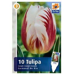 Tulipany Carnaval De Rio