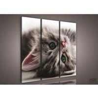 Obrazy, Obraz Słodki kociak PS957S6