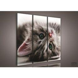 Obraz Słodki kociak PS957S6