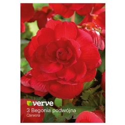 Cebule begonia podwójna Verve czerwona 3 szt.