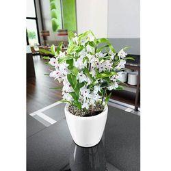 Donica lechuza classico ls - taupe (kawa z mlekiem) - 35cm, połysk