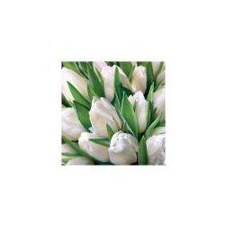 Karnet kwiatowy kwadrat białe tulipany FF26 - FF26