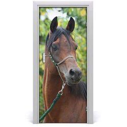 Naklejka samoprzylepna na drzwi Portret konia